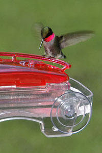 WBU Window Hummingbird Feeder